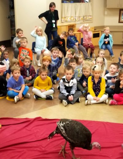 turkeys- preschool